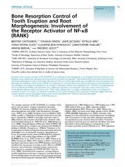 Castaneda et al_2011_Bone resorption control of tooth eruption and root morphogenesis.pdf