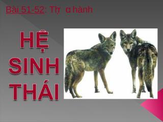 Bai 51-52Thuc hanh He sinh thai.ppt